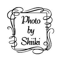 有限会社椎木写真館